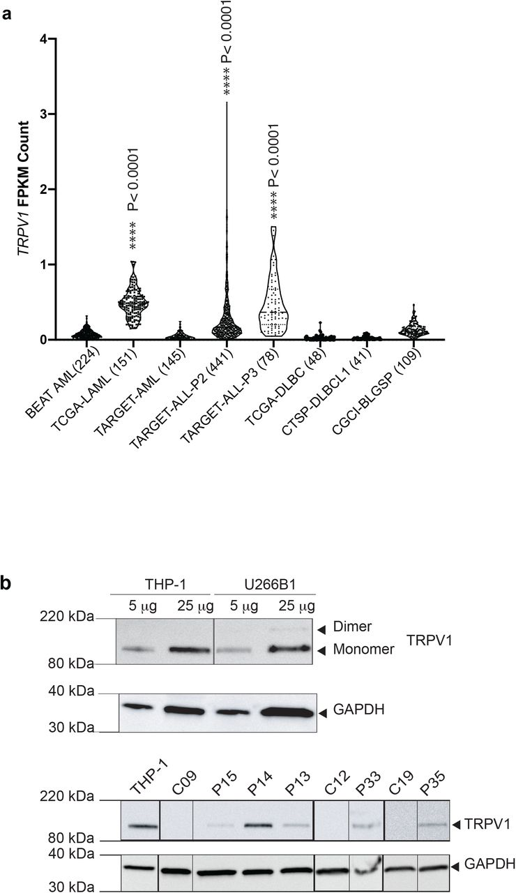TRPV1 gene and protein expression using RNA-sequencing data and Western blotting. (A) TRPV1 gene expression in different databases. *P